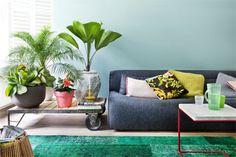 Visite altijd welkom, maar planten zijn ook goed gezelschap in huis. Qua gezelligheid maar ook letterlijk, want ze zuiveren de lucht en hebben een weldadige uitwerking. Zet ze voor een zo groot mogelijk oase-effect bij elkaar, bij voorkeur op een lichte plek. Wissel hoge exemplaren af met lage en varieer in bladvormen. Van links naar rechts: Kalanchoë, Mexicaanse dwergpalm (Chamaedorea), Chinese roos (Hibiscus) en waaierpalm (Licuala).