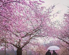 Engagement shoot / pre-wedding photography // Battersea Park, London