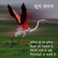 Shayari Hi Shayari: Best good morning quotes in hindi