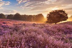 The Netherlands, Veluwe