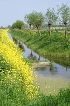 Lente in Holland - wilgen - landschap