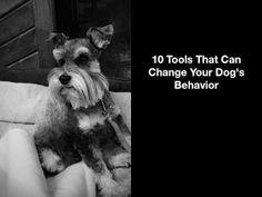 My Schnauzer Addiction: 10 Tools That Can Change Your Dog's Behavior Schnauzer Breed, Miniature Schnauzer Puppies, Mini Schnauzer, Schnauzers, Dog Training Tools, Training Your Dog, Silly Dogs, Big Dogs, Most Popular Dog Breeds