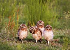 Comedy Wildlife Photography Awards 2016 Finalists