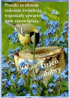 Bird Feeders, Outdoor Decor, Animals, Animales, Animaux, Animal, Animais, Teacup Bird Feeders
