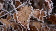 """The question we are asked very often at this time of year is""""Is it too cold to plant trees & hedging?' No it's not, it is actually a great time to plant the bare-root trees and hedging. As the..."""