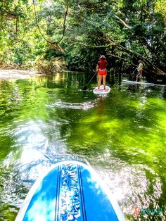 Stand Up Paddle Boarding, Mossman River, Queensland, Australia. Hoping to travel to Australia in the next few years. Sup Boards, Queensland Australia, Australia Travel, Coast Australia, Visit Australia, South Australia, Western Australia, Cairns, Paddle Boarding
