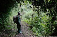 A dense jungle on both side of the road. A few times a steep slope gives the view free over the green, lush forest. East Africa, Mists, The Past, Places, Travel, Viajes, Destinations, Traveling, Trips