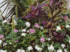 plante exotique intérieur | Des plantes d'intérieur originales