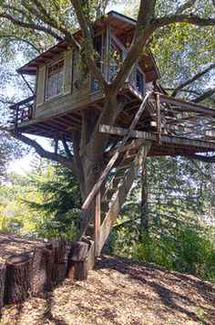 A Northern California Tree House Makes Memories