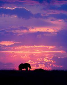 [フリー画像素材] 風景, 夕日 / 日の入り, 空, 雲, 動物, 哺乳類, 象 / ゾウ ID:201501152000