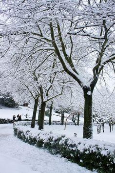 snowing...in my park