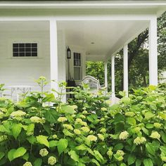 Chic Connecticut Cottage of Michael DePerno and Andrew Fry (Habitually Chic) Outdoor Spaces, Outdoor Living, Foundation Planting, Home Porch, White Gardens, Beautiful Stories, Naturally Beautiful, Curb Appeal, House Tours