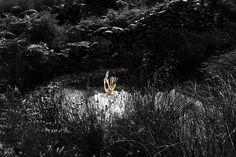 In Search of Faerie by Julian Bolt 'Elf 2'