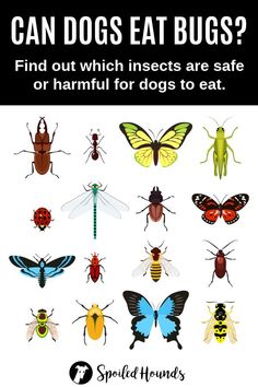 Can dogs eat bugs? Keep your dog safe and find out what you need to know about dogs eating bugs, insects, and worms. #pets #dogs #doglovers #doghealth #doginformation #dogownertips #pethealth #insects #bees Photos Hd, Stock Photos, Curious Creatures, Can Dogs Eat, Animal Silhouette, Bugs And Insects, Icon Set, Illustrations Posters, Vector Art