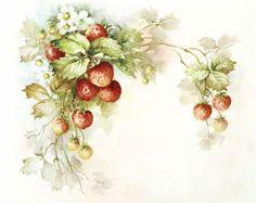 Virág és gyümölcs SONIE Ames. Vita LiveInternet - orosz Service Online Diaries