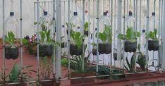 vasi da ringhiera per insalata fatti con bottiglie di plastica