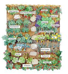Kitchen garden: Big harvest in a small area - Planting plan for a good mixed culture in the kitchen garden Informations About Küchengarten: Groß - Design Jardin, Garden Design, Organic Gardening, Gardening Tips, Urban Gardening, Vegetable Gardening, Beginners Gardening, Vegetables Garden, Fairy Gardening