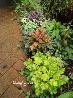 Discover the best plants for your very own backyard vegetable garden. Check out our article that shows you the easiest plants to get started. Garden Paths, Garden Help, Outdoor Gardens, Vegetable Garden Diy, Hardy Plants, Trees To Plant, Shade Garden, Plants, Backyard Vegetable Gardens