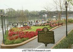 Augusta, Georgia, Colorful spring flowers along the Savannah River and Riverwalk…