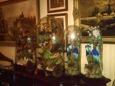 Victorian Taxidermy Glass Dome