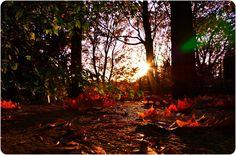 La stagione dai mille colori... #EssenReisenLeben #Herbst #Autunno #Autumn