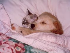 With a Little Help from My Friends, Sweet Dreams tumblr friends ♥