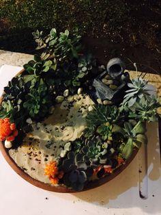 Terrario La Fuente entre Suculentas Estrella y Pórtico de Cactus Naranja