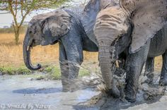Umani Springs is managed by The David Sheldrick Wildlife Trust, and is a magical place to play with the baby elephants in the beauty of the Kibwezi forest.