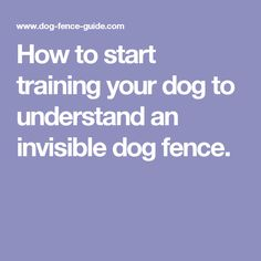 How to start training your dog to understand an invisible dog fence. Puppy Obedience Training, Dog Training Tips, Pet Supermarket, Jumping Dog, Puppy Breath, Dog Separation Anxiety, Aggressive Dog, Dog Items, Dog Fence