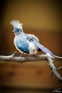 Indy Zoo bird by Paul D'Andrea