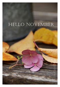 All Seasons: Hello November!