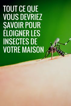 Guepe Dans La Maison Signification : guepe, maison, signification, Idées, Insectes, Insectes,, Guêpes,, Guêpe