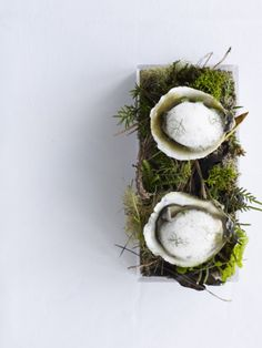 Oysters in the Bush. Fresh Oysters served under a light lemoned kawakawa freeze. so so nice Appetizer Buffet, Gourmet Appetizers, Modernist Cuisine, Fresh Oysters, Tapas, Romantic Meals, Dessert For Dinner, Molecular Gastronomy, Gastronomia