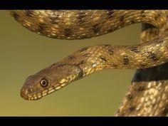 Serpenti d'Italia – ilmanu.eu