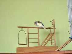 Výsledok vyhľadávania obrázkov pre dopyt hracky pre papagaja Shelves, Home Decor, Shelving, Decoration Home, Room Decor, Shelving Units, Home Interior Design, Planks, Home Decoration