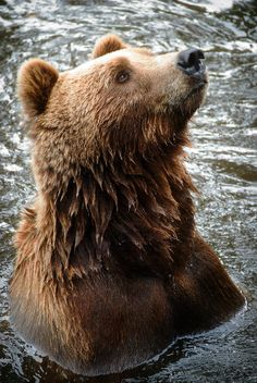Welcome to Earth song | Bear #photography #wildlife