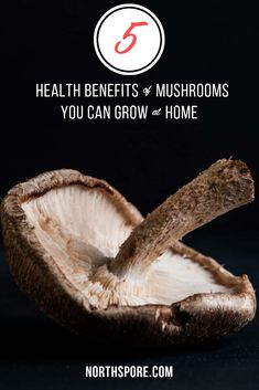 5 Health Benefits of Mushrooms You Can Grow At Home