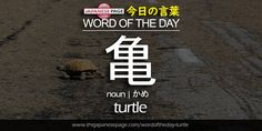 Beginner Word of the Day – 亀 [turtle]