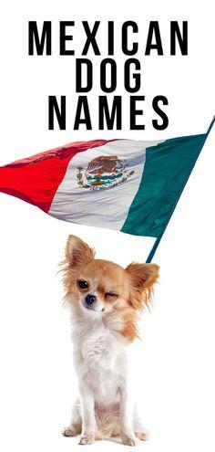 mexican dog names
