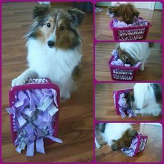 Do it Yourself Dog Games page Do it Yourself Hundespiele Brain Games For Dogs, Dog Games, Diy Dog Toys, Pet Toys, Homemade Dog Toys, Toy Puppies, Dogs And Puppies, Baby Dogs, Cute Baby Animals