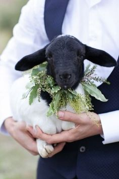 Lamb with garland necklace.