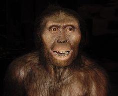 LUCY: El fósil más completo, llamado Lucy, fue descubierto por el estadounidense Donald JohansonSe trata del esqueleto de una hembra de un homínido de la especie Australopithecus afarensis de alrededor de 1 metro de altura, de aproximadamente 27 kg de pesode unos 20 años de edad y que al parecer tuvo hijos.