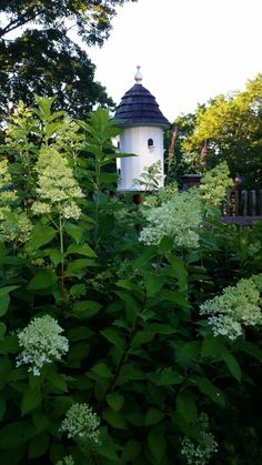 Garden Images, Garden Pictures, Dream Garden, Home And Garden, Garden Poems, Lee Garden, Witchy Garden, Witch Cottage, Green Street
