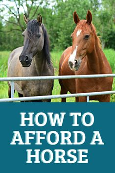 Why do you think is it essential to consider the proper suggestions in acquiring the equestrian boots to be utilized with or without any horseback riding competitors? Buy A Horse, My Horse, Horse Feed, Horse Care Tips, Types Of Horses, Equestrian Outfits, Equestrian Fashion, Equestrian Style, Horse Barns