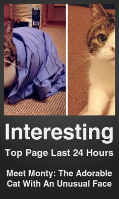 Top Interesting link on telezkope.com. With a score of 27477. --- Meet Monty: The Adorable Cat With An Unusual Face. --- #interesting --- Brought to you by telezkope.com - socially ranked goodness.