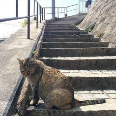 猫発見2匹目です #尾道ネコ歩き by azukki