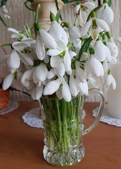 ✿ڿڰۣ(̆̃̃ღ Flowers Nature, Spring Flowers, Beautiful Flowers, Budget Bride, Hello Spring, Lily Of The Valley, Wedding Bouquets, Flower Arrangements, Diy And Crafts