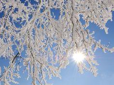 На Різдво в Україні очікуються сильні морози. «Похолодання буде із 6 по 9 січня, буде дуже холодна погода з температурою -17. #time_ua #новини #Україна #Київ #новости #Украина #Киев #news #Kiev #Ukraine  #EU #Суспільство