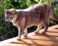 9. Cats Enjoy the Sun  If your cat appears to be able to tolerate heat very well this is because the ancestors of cats were originally desert-living animals.