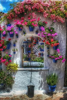 Bougainvillea over the arch and blue pots with geraniums.